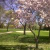 A spring view from Royal Oak Golf Club
