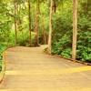 A view of the 8th path at Hampton Golf Club