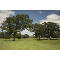 The third hole at Tullymore Golf Club is a short par 4 that is defended by two giant trees.